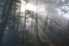 Πίσω φως στο ξύλο Στοκ Φωτογραφία