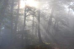 Πίσω φως στο ξύλο Στοκ εικόνες με δικαίωμα ελεύθερης χρήσης
