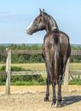 Πίσω foal που προσέχει το τοπίο Στοκ Εικόνες