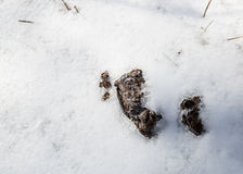 Πίτα αγελάδων Στοκ Εικόνα