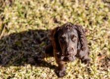 Παίζοντας και χαλαρώνοντας καθορισμός σκυλιών κουταβιών Στοκ Εικόνα
