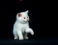 παίζοντας λευκό γατακιώ&nu στοκ εικόνα με δικαίωμα ελεύθερης χρήσης