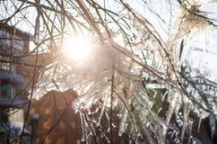 Παγάκια στον κλάδο oficicles στον κλάδο του δέντρου στο φως ακτίνων ήλιων Στοκ Φωτογραφίες