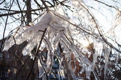 Παγάκια στον κλάδο oficicles στον κλάδο του δέντρου στο φως ακτίνων ήλιων Στοκ Εικόνες