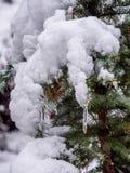 Παγάκι και φορτωμένος χιόνι αειθαλής κλάδος Στοκ εικόνα με δικαίωμα ελεύθερης χρήσης