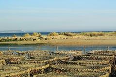 Παγίδες καβουριών και αστακών Στοκ Φωτογραφίες