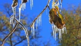 Παγετοί του πρώτου φθινοπώρου απόθεμα βίντεο