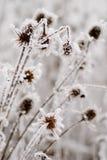 παγετός γραφείου Στοκ εικόνα με δικαίωμα ελεύθερης χρήσης
