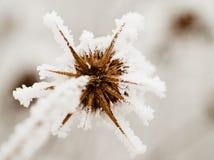 παγετός γραφείου Στοκ φωτογραφίες με δικαίωμα ελεύθερης χρήσης