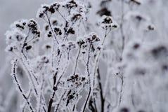 παγετός γραφείου Στοκ Φωτογραφίες