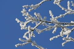 παγετός κλάδων Στοκ εικόνες με δικαίωμα ελεύθερης χρήσης