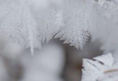 Παγετός κρυστάλλου Στοκ Εικόνες