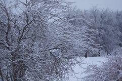 Παγετός μετά από thaw Στοκ φωτογραφία με δικαίωμα ελεύθερης χρήσης