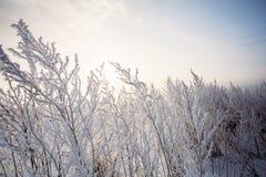 Παγετός πρωινού στον τομέα χλόης Στοκ φωτογραφία με δικαίωμα ελεύθερης χρήσης