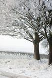 Παγετός στα δέντρα στο χιόνι στοκ φωτογραφίες με δικαίωμα ελεύθερης χρήσης