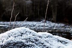 Παγετός στην ανάπτυξη στους βράχους Στοκ Φωτογραφίες