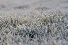 Παγετός στη χλόη στον ήλιο ξημερωμάτων Στοκ Φωτογραφίες