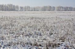 Παγετός στον τομέα Στοκ Εικόνες