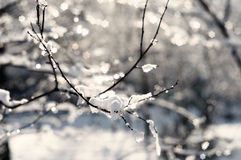 Παγετός στους κλάδους ενός δέντρου Στοκ εικόνα με δικαίωμα ελεύθερης χρήσης