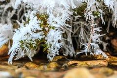 Παγετός στους κλάδους Στοκ φωτογραφία με δικαίωμα ελεύθερης χρήσης