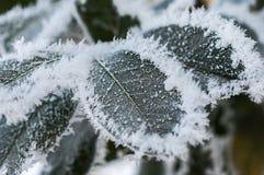 Παγετός στο φύλλο και snowflakes Στοκ εικόνες με δικαίωμα ελεύθερης χρήσης