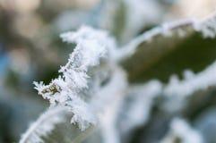 Παγετός στο φύλλο και snowflakes Στοκ φωτογραφίες με δικαίωμα ελεύθερης χρήσης