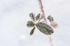 Παγετός στο φύλλο και snowflakes Στοκ Εικόνα