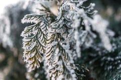 Παγετός στο φύλλο και snowflakes Στοκ Φωτογραφίες