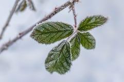 Παγετός στο φύλλο και snowflakes Στοκ Φωτογραφία