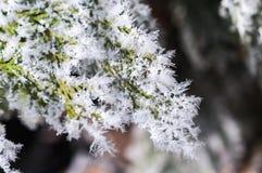 Παγετός στο φύλλο και snowflakes Στοκ φωτογραφία με δικαίωμα ελεύθερης χρήσης