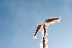 Παγετός στο φύλλο και snowflakes Στοκ εικόνα με δικαίωμα ελεύθερης χρήσης