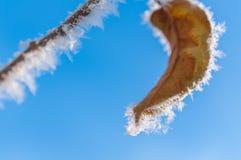 Παγετός στο φύλλο και snowflakes Στοκ Εικόνες