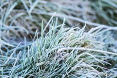 Παγετός στο χειμερινό πρωί χλόης Στοκ Φωτογραφίες
