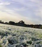 Παγετός στο χλοώδες λιβάδι στοκ φωτογραφία με δικαίωμα ελεύθερης χρήσης
