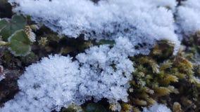 παγετός Στοκ εικόνες με δικαίωμα ελεύθερης χρήσης
