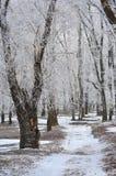 Παγετός. Στοκ εικόνα με δικαίωμα ελεύθερης χρήσης