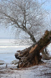 Παγετός. Στοκ εικόνες με δικαίωμα ελεύθερης χρήσης