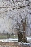 Παγετός. Στοκ φωτογραφία με δικαίωμα ελεύθερης χρήσης