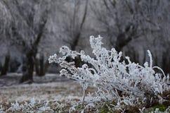Παγετός. Στοκ Φωτογραφίες