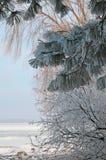 Παγετός. Στοκ Εικόνες