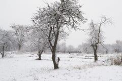 παγετός Στοκ εικόνα με δικαίωμα ελεύθερης χρήσης