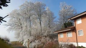 παγετός Στοκ φωτογραφία με δικαίωμα ελεύθερης χρήσης