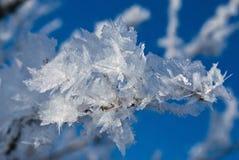 Παγετός Hoar στον κλάδο δέντρων Στοκ Εικόνες