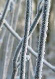 παγετός hoar Στοκ φωτογραφίες με δικαίωμα ελεύθερης χρήσης