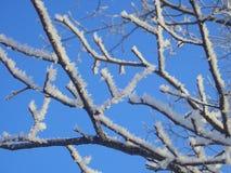 παγετός hoar Στοκ εικόνες με δικαίωμα ελεύθερης χρήσης