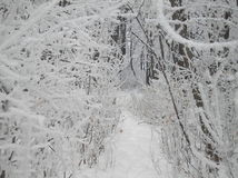 Παγετός Hoar Στοκ Φωτογραφίες