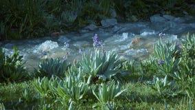 Παγετώδεις ροές του νερού σε ένα ρυάκι υψηλό στα βουνά φιλμ μικρού μήκους