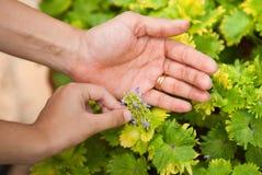 παγιοποίηση χεριών Στοκ φωτογραφίες με δικαίωμα ελεύθερης χρήσης