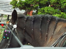 παγιοποιημένο άλογο στοκ φωτογραφία με δικαίωμα ελεύθερης χρήσης