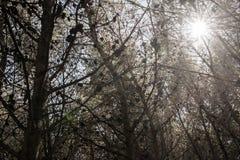 Παγιδευμένος στο δάσος στοκ εικόνες